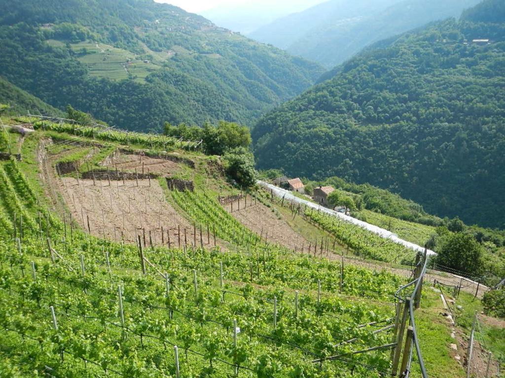 agricoltura-campagna-montagna-foto-2_imagefullwide-1024x768.jpg