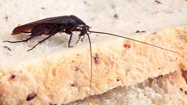 scarafaggio.jpg