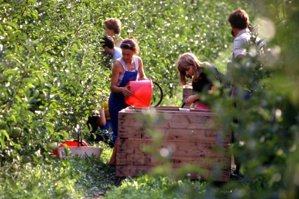 raccolta-frutta-RM_agricoltura1_imagefullwide-1024x684.jpg