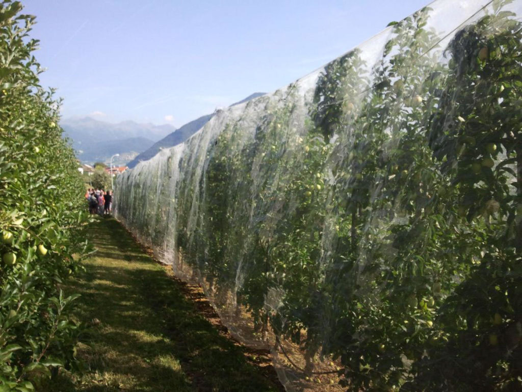 reti-Multifunzionali-alberi-frutto-cimice-asiatica-1024x768.jpg