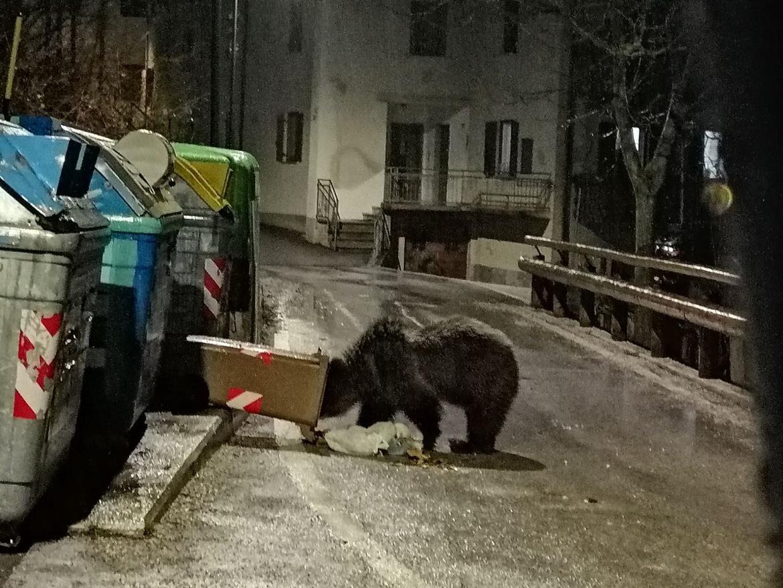 Giovane-orso-su-cassonetti-a-Cavedago