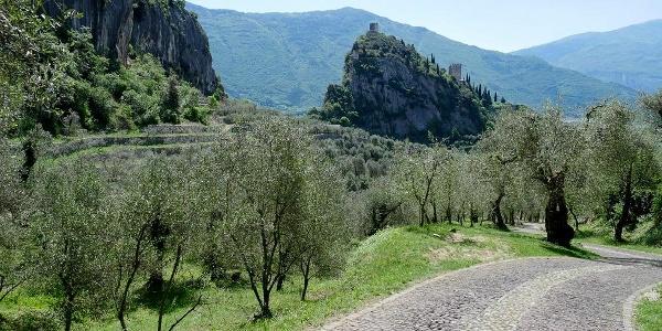 il-castello-e-l-olivaia-di-arco.jpg
