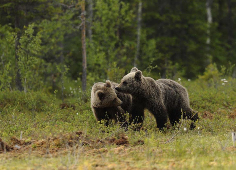 orso orsi foto frapporti