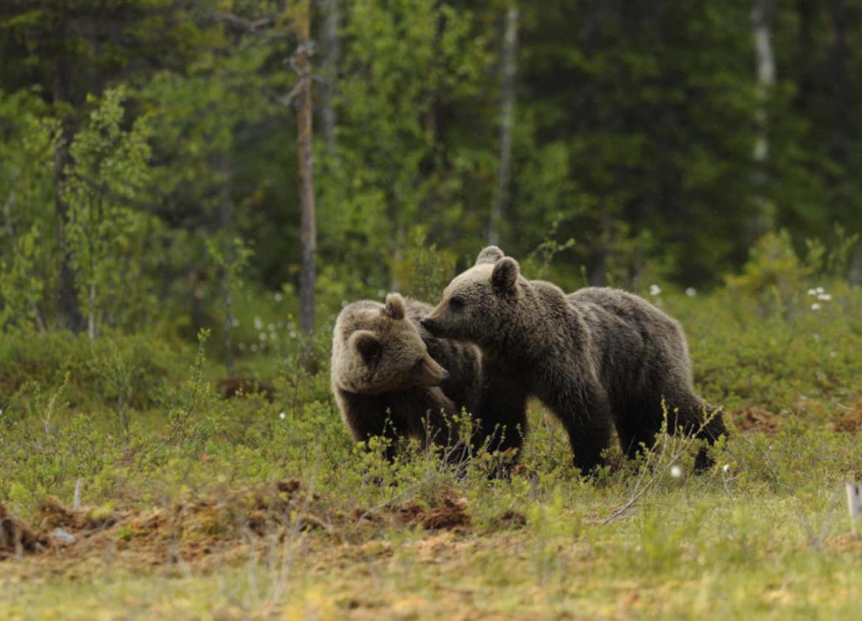 orso-orsi-foto-frapporti.jpg